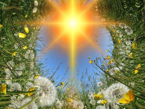 Солнце и цветы
